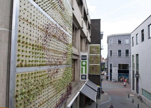 Verticale tuin voor stadhuis hasselt for Verticale tuin systeem
