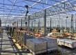Tuinbouwkas in aanbouw