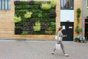 Groene gevel in gerenoveerde straat