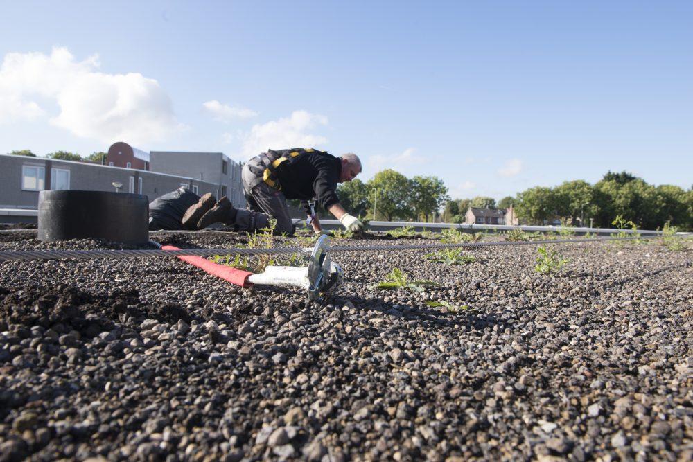 Waterberging voedt beplanting