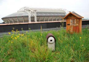 Primeur groene vogeldak in Nederland