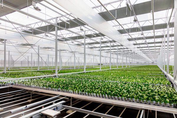 Naast het energiesysteem realiseerde Technokas ook 49.000 m2 aan kassen.