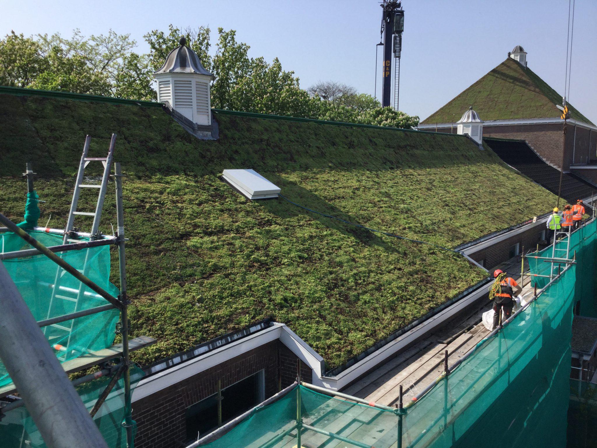 aanleg groendak Sedum vervangt dakpannen op 100 jaar oud zadeldak