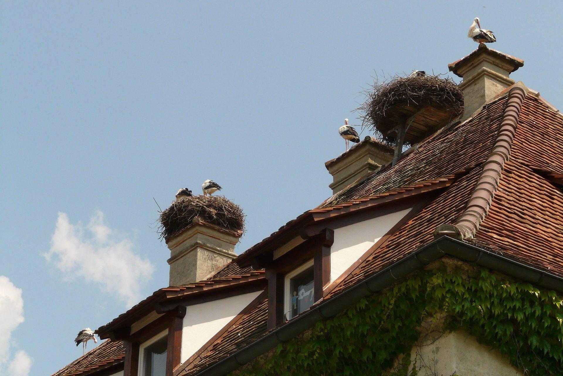 nestvoorziening, checklist groen bouwen