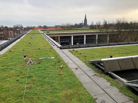 Het dak van de Dalton school in Voorburg, voorzien van groendak en ACO SpongeTop. De dakrand heeft een vegetatievrije zone van 50-60 cm door middel van betontegels.